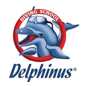 Island of the blue Dolphins Essays - ManyEssayscom